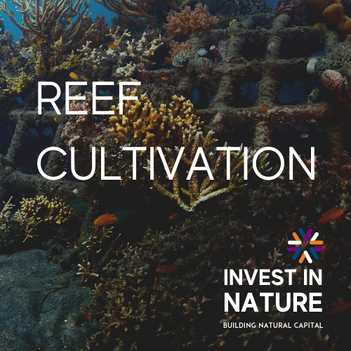 Reef Cultivation